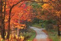 Indiana: Homesick Hoosier