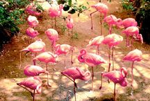 Flamingo Fancy