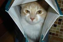 CatTitude in a bag / Cat in a bag... box...