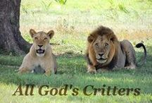 All God's Critters / I love the variety in God's critters. Color, humor, whimsy, strength, speed . . . what an awesome God! Glory!
