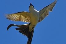 birds / by Rebecca Littlefield
