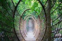 bridges / by Rebecca Littlefield