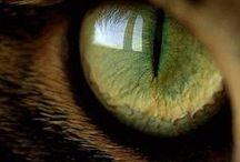 amazing eyes / by Rebecca Littlefield