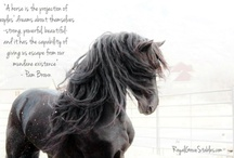 Horses / The magic of the horse's spirit is truly a gift from above. <3