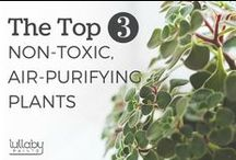 Non-Toxic Living / Avoid toxic chemicals in everyday products by using these easy tips for a healthier home.