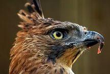 Bird of Prey / by Rebecca Littlefield