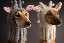 Hounds in Hats!