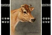 Jersey Cattle / One of/maybe my favourite cattle breed, the active, inquisitive, people-centric, beautiful Jersey!
