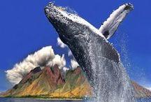 Animals We Love / Hyatt Regency Maui