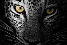 | BEAST / BEAST - NATURE - ANIMAL
