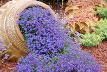Garten / Ideen für die Gartengestaltung...