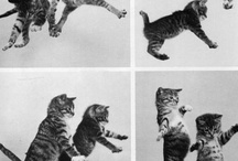 I want a KITTY / by Alyssa Yuhas