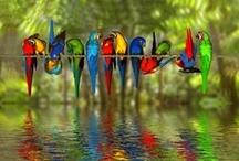 Animals - Birdies - Fishes