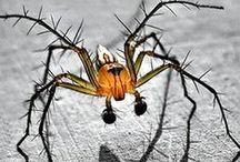 Spidey Sense / SPIDERS!!! / by Ashley Ohnmeiss-Moyer