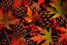 Autumnal goodness