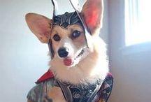 Corgi Dogsies / Corgi Dogs
