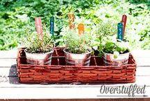 VEGETABLE & HERB GARDEN / Vegetable and herb garden tips and tricks.