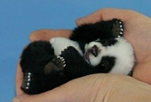 so cute / for those ,OMG CUTE, squealing moments (baby animals) / by Laurel Kerr