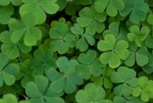 St. Patrick's Day / by Abby W.
