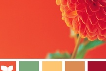 Color Inspirations / by Julia Searl Moore