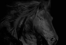 Creatures That Inspire! / by Dark Pony Designs
