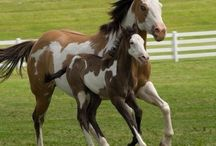 Abbie's favorite horses. / Mostly horses and some other. / by Selena Kurfees