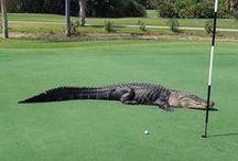 Golf / by Pamela *