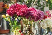 Flores  & Plantas - Flowers / by Ana Konda