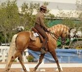 Horses of Calibure
