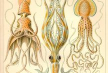 Ernst Haeckel / Ernst Haeckel love all over the place!