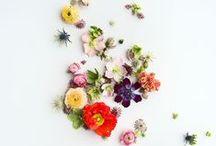 Flowers + Floral Design