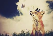 Foxes