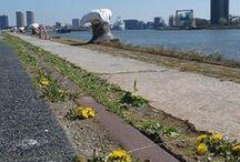 Lente in Rotterdam 2015