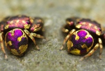 The Colorful World of Insects / Bugs, Insects, and other invertebrates worthy of a second look! / by xylemandphloemgames