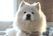 MEANINGFUL things / #meaningful things, #samoyed, #nature http://www.pinterest.com/nlappalainen/meaningful-things/