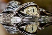Fascinating Eyes