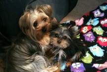 For Martini and Stella!! / Everything dogs! / by Jessica Fite