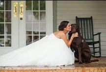 Wedding Bells / by Taylor Genander