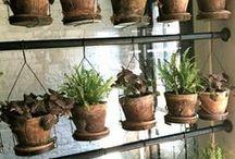 home | greenthumb / plant ideas, gardens, bushes, trees, flowers, vines, greenhouses, home decor, renovation ideas