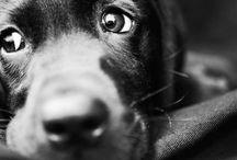Animals :) / by Lauren Benning