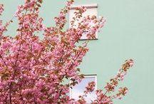 // pastels love / by Drea ▲