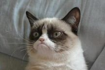 Grumpy Cat / by Erica Matheis