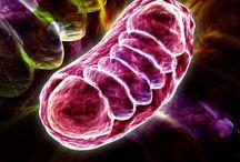Mitochondrial Disease - Lhon