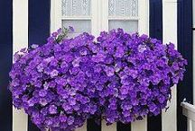 WINDOW BOXES /