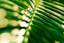 Green / Sfumature di verde