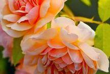Beautiful Fowers / Beautiful flowers