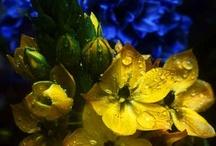 ~ belles fleurs II ~ / ~ bread feeds the body but flowers feed the soul ~~ (the koran) ~ / by Jewel Tillotson