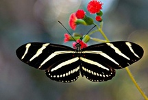 ~ flutterbys & friends II ~ / ~ if nothing ever changed ~ there'd be no butterflies ~ / by Jewel Tillotson