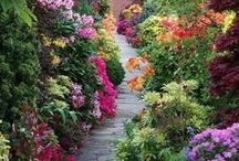 Garden / Beautiful garden and charming views and objects