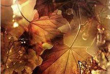 Seasons: Autumn / everything that makes you welcome the autumn season